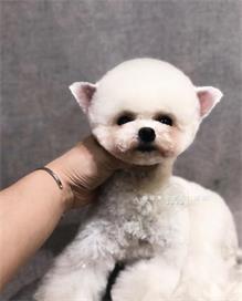 天津宠物美容培训中心