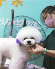 金文锡宠物美容培训学校