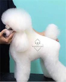 天津宠物美容机构