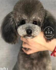 天津宠物美容师培训