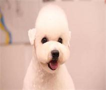 天津宠物美容学校